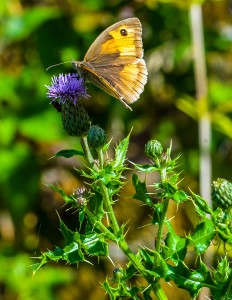 web_Rookery_Park_Holiday_Cottages_Suffolk_8755_600px